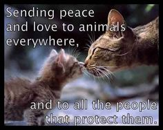 Momma cat and baby kitty touching noses in kiss.quote, sending peace and love to animals everywhere and to all the people that protect them. Animals And Pets, Baby Animals, Funny Animals, Cute Animals, I Love Cats, Crazy Cats, Cute Cats, Cat Quotes, Animal Quotes