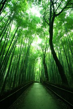 Beautiful Places In Japan, Beautiful Places To Visit, Beautiful World, Green Landscape, Fantasy Landscape, Landscape Photography, Nature Photography, Gold Wallpaper Background, Japan Photo