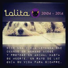 Un año extrañandote #BastetPets #lola #memories #Schnauzer #love