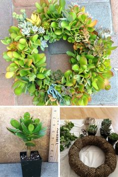 How to make a succulent (jade / crassula) wreath and a bunch of Fun + Funky Succulent Planter Ideas! #succulent #ad
