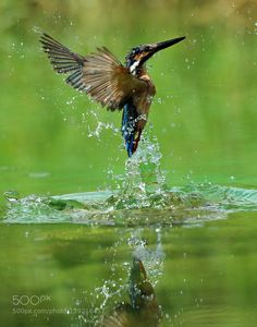Out of water by songzhujutx #animals #animal #pet #pets #animales #animallovers #photooftheday #amazing #picoftheday