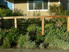 Fencing and plants in front of the fence