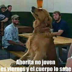 Hoy es viernes señores y Lucho lo sabe. #Viernes #Lucho #ahoritanojoven #Cerveza #sed #bar #perro #Mascota #ElSalvador #SrElMatador #SrElMatador http://www.srelmatador.com #Foto