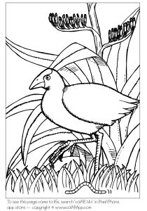 Quiver Augmented Reality coloring apps: print, color and see your drawing in beautifully hand-animated worlds Coloring Apps, Colouring Pages, Maori Patterns, For Elise, Nz Art, Kiwiana, Bird Embroidery, Rock Crafts, Bee Crafts