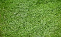 Grass Texture by Jshei.deviantart.com on @deviantART