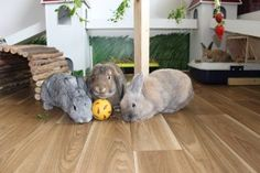 Rabbits love treat balls - just like a dog does. Buy them here http://best4bunny.com/productcat/toys/