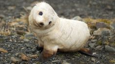 Baby marine mammals are the most adorable things ever.