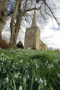https://flic.kr/p/DCTvqu | St Mary's, West Malling | www.adamswaine.co.uk The Parish Church of St Mary-the-Virgin is located at the top of the High Street in West Malling. The tower and the western part of the chancel remain from the original Norman church that was built by Bishop Gundulph nearly 1,000 years ago