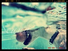 South African Artists, Underwater, Creatures, Horses, Puppies, Fine Art, Cats, Prints, Photography