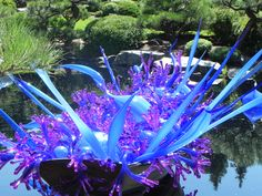 Dale Chihuly glass sculpture at Denver Botannical Gardens. 8-15-2014