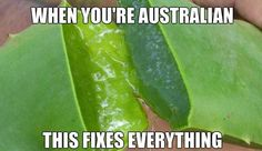 17 Random Wildly Entertaining Australian Shenanigans From The Land Down Under - A Funny And Fun World Brisbane, Perth, Melbourne, Australia Map, Australia Funny, Australia Tattoo, Australian Memes, Aussie Memes, Funny Fails