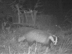Wild Wood en Provence: badger martin dog and birds