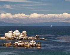 Sailboat In Monterey Bay