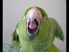 How to Train a Parrot : How to Train Parrots to Stop Biting - YouTube