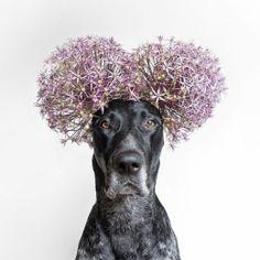 L'instagramer allemand Samuel Jurcic s'amuse beaucoup avec son chien Lal, un braque allemand à poil dur. Régulièrement il diffuse ses...