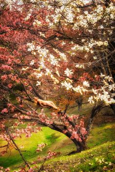 Intimate Photography, All Over The World, Studios, Cherry, Country Roads, Japan, Plants, Hokkaido, Prunus