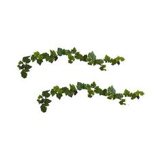 Grape Leaf Garlands with Grapes set of ($34) ❤ liked on Polyvore featuring home, home decor, green, green home decor and grapes home decor