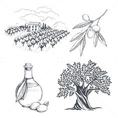 Hand-Drawn Olive Sketch by Lubashka Hand-drawn olive collection. Tree, branch, oil bottle and olive field. Blossom Tree Wedding, Fall Tree Painting, Tree Wallpaper Iphone, Christmas Tree Pictures, Tree Icon, Tree Sketches, Tree Illustration, Watercolor Trees, Tree Sculpture