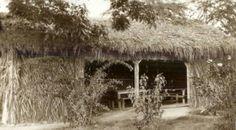 20's Oahu community center? Oahu, Community, Cabin, House Styles, Plants, Home Decor, Decoration Home, Room Decor, Cabins