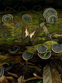 Moss.....(via themoonprayer)