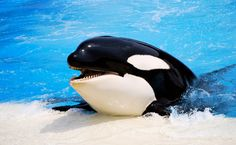 These Are the 10 Worst Tanks for Whales and Dolphins