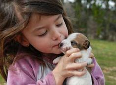 Jack Russell Terrier: Training Tips For Jack Russell Terrier Dog Breeds Jack Russell Puppies, Jack Russell Terrier, Cute Puppies, Cute Dogs, Terrier Dog Breeds, Training Your Puppy, Potty Training, Training Tips, Jack Russells