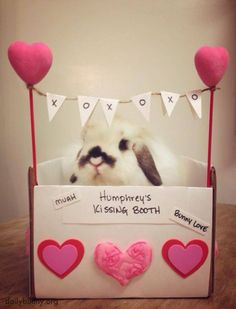 Make sure you bring a treat for bunny at his kissing booth! - February 23, 2014