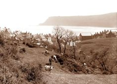 Ref: Frank Sutcliffe, Robin Hood's Bay What A Wonderful World, Vintage Pictures, Old Pictures, Robin Hoods Bay, Bay Photo, Victorian Photos, Northern England, North East England, Old Images