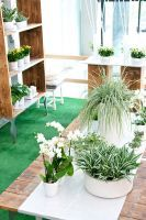 Green plants and flowering plants fit well in an All White presentation