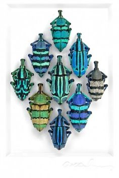 Bugs, Christopher Marley                                                                                                                                                                                 More