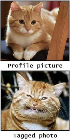 Always happens... Difference of profile and tagged pictures