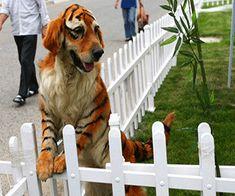 Best dog halloween costume!