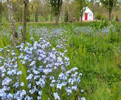 Relaxing walks around the bluebells in the woodland around our site. #flowers #glamping