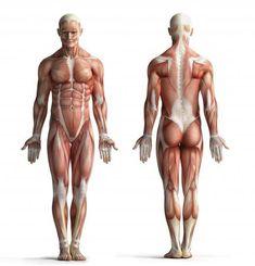Diez curiosidades sobre los músculos que quizás no conocías.