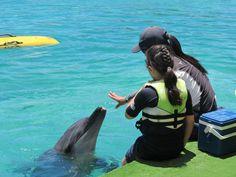 布里斯本❤️海洋世界 小海豚