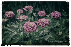 Tough Buds | Cheryl Bez Photography © cherylbez.photography Cheryl, Bud, Landscape, World, Plants, Photos, Photography, Beautiful, Pictures