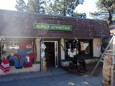 Alpaca Advantage in Lake Tahoe