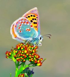 Photogenic Insects https://www.pinterest.com/joysavor/photogenic-insects/