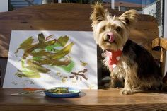 Tenerife Dogs: Paintings by dogs..!