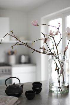foto © elisabeth heier  Og plutselig var knoppene på de vakre magnoliagrenene sprunget ut! Ren vårlykke på kjøkkenet når grenene som har stått i vann endelig viser de nydelige lyserosa blomstene sine.