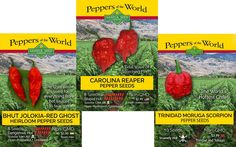 Make sure not to miss our full hot pepper seeds collection from Sandia Seed! We have hundreds of peppers from around the world, including all of the hottest peppers in the world including the famous Carolina Reaper seeds, as well as the new Dragon's Breath Pepper seeds.