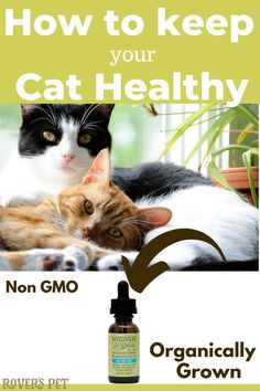 #cbdoil Looking for the best CBD Oil for your cat? Whisker's Relief by Rover's Pet is your first and only CBD oil resource. Recommended to help support joint flexibility and mobility. Supports a healthy inflammatory response. For cats exhibiting nervousness, hyperactivity, discontentment or responding to environmentally-induced stress. For stress from traveling, hospitalization or moving --SHOP Rover's Pet and get the best in CBD oil for your pets today! #cbdoilpets First Time Cat Owner, Endocannabinoid System, Cat Products, Cat Whiskers, Oil Benefits, Pet Tips, Cat Health, Health Advice, Cat Toys