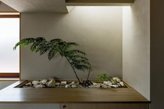 Hearth Architect was responsible for this wonderful creation. The house resides in the Shiga Prefecture, an area of the Western part of Japan. Japanese Indoor Plants, Indoor Zen Garden, Indoor Planters, Plants Indoor, Japanese Modern, Japanese Interior, Japanese Design, Interior Garden, Interior Exterior