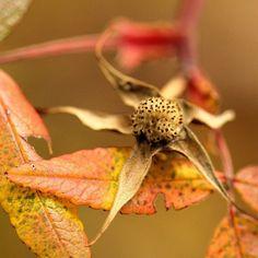 #OkanaganLens #Okanagan #OkanaganLight #rural #garden #gardenlove #Seasons #Autumn #InstaOkanagan #thelightlaughed #fadedlove #Fallleaves