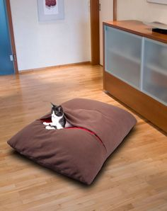 DIVAN Due - cat pillow and cat design object, cat design, cat pillow, pet products, pet stores