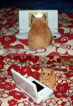 20 Reasons Why Hamsters Should Be Your New Heroes