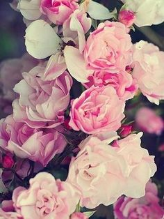 Rose Floral Ipad Mini Resolution  Backgrounds For Your Phone Pretty Backgrounds