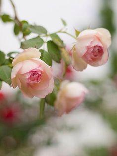 OBEE DESIGNS.  #roseyposey    http://obeedesigns.tumblr.com/post/113829283709❤️