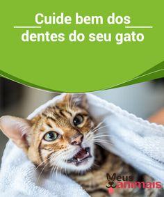 Cuide bem dos dentes do seu gato: contaremos como escová-los  Muito se escuta sobre o #cuidado com os #dentes dos #cães. No entanto, escutamos muito pouco sobre como limpar os dentes dos gatos. #Saúde