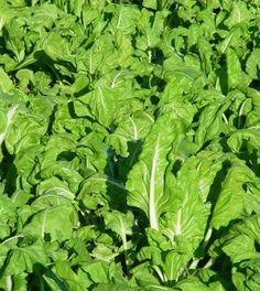El huerto urbano. Plantar, Homesteading, Vegetables, Agra, Ideas Para, Gardening, Gardens, Growing Vegetables, Herb Garden